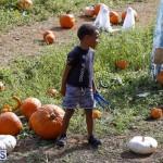 J&J Produce Pick Your Own Pumpkin Bermuda October 11 2019 (58)