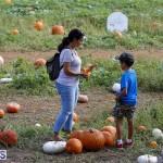 J&J Produce Pick Your Own Pumpkin Bermuda October 11 2019 (64)
