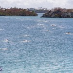 Round the Sound Swim Bermuda, October 13 2019-6001