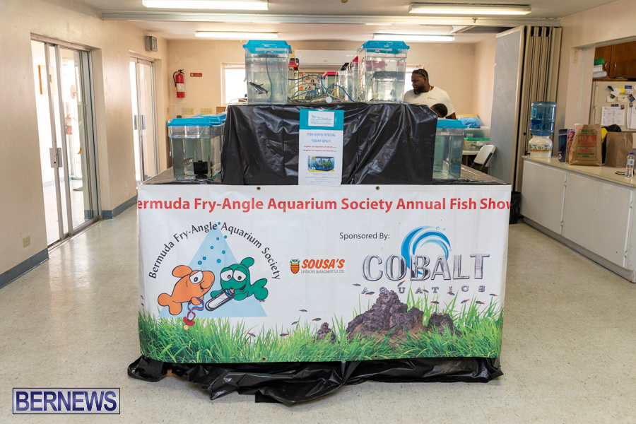 Bermuda-Fry-Angle-Aquarium-Society-Annual-Tropical-Fish-Show-November-16-2019-2444