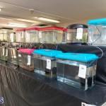 Bermuda Fry-Angle Aquarium Society Annual Tropical Fish Show, November 16 2019-2446