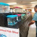 Bermuda Fry-Angle Aquarium Society Annual Tropical Fish Show, November 16 2019-2447