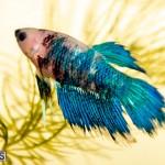 Bermuda Fry-Angle Aquarium Society Annual Tropical Fish Show, November 16 2019-2498