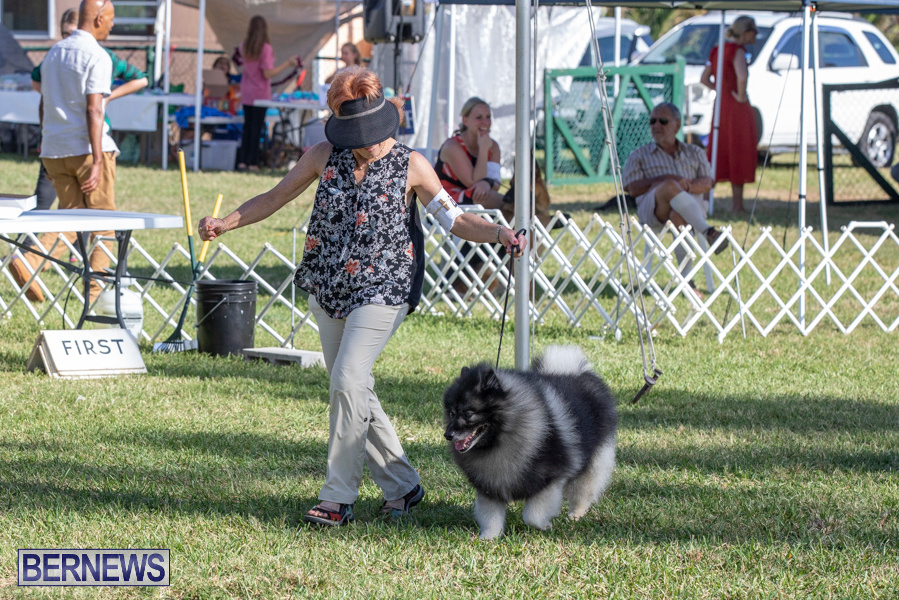 Devils-Isle-All-Breed-Club-2019-Bermuda-International-Dog-Shows-Bermuda-November-2-2019-0482