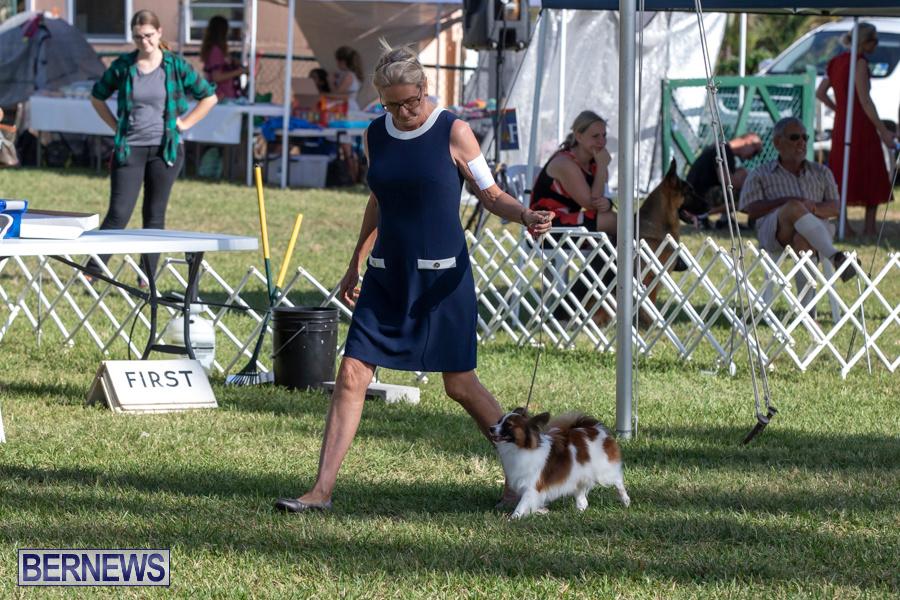 Devils-Isle-All-Breed-Club-2019-Bermuda-International-Dog-Shows-Bermuda-November-2-2019-0504