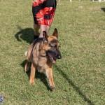 Devil's Isle All Breed Club 2019 Bermuda International Dog Shows Bermuda, November 2 2019-0511