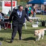 Devil's Isle All Breed Club 2019 Bermuda International Dog Shows Bermuda, November 2 2019-0523