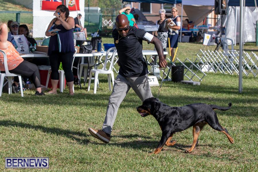 Devils-Isle-All-Breed-Club-2019-Bermuda-International-Dog-Shows-Bermuda-November-2-2019-0527