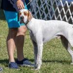 Devil's Isle All Breed Club 2019 Bermuda International Dog Shows Bermuda, November 2 2019-0563