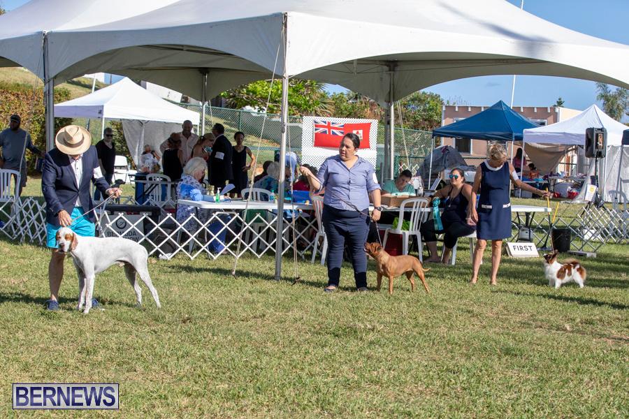 Devils-Isle-All-Breed-Club-2019-Bermuda-International-Dog-Shows-Bermuda-November-2-2019-0571