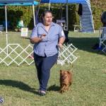 Devil's Isle All Breed Club 2019 Bermuda International Dog Shows Bermuda, November 2 2019-0577