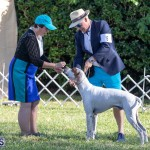 Devil's Isle All Breed Club 2019 Bermuda International Dog Shows Bermuda, November 2 2019-0584