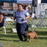 Devil's Isle All Breed Club 2019 Bermuda International Dog Shows Bermuda, November 2 2019-0599