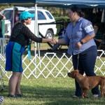 Devil's Isle All Breed Club 2019 Bermuda International Dog Shows Bermuda, November 2 2019-0608