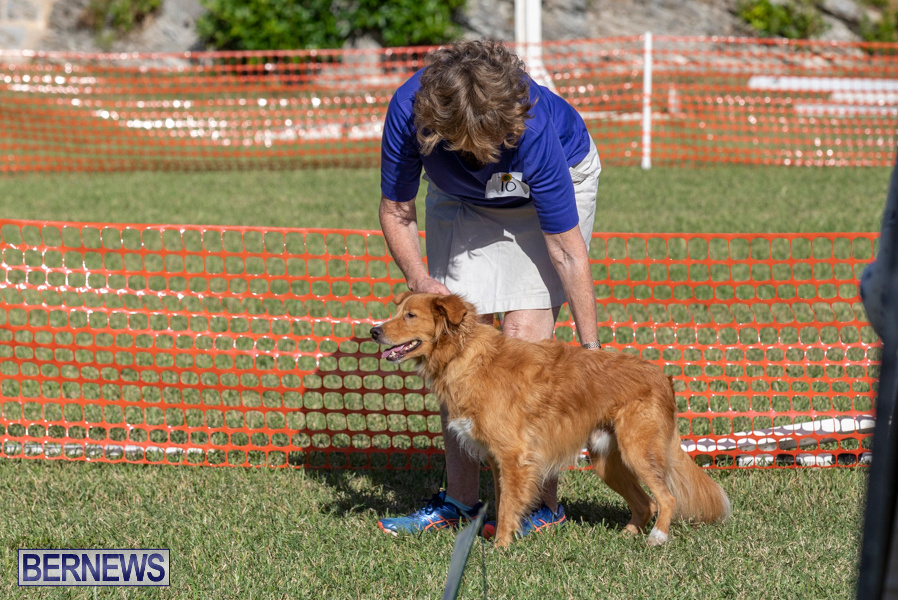 Devils-Isle-All-Breed-Club-2019-Bermuda-International-Dog-Shows-Bermuda-November-2-2019-0610