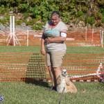 Devil's Isle All Breed Club 2019 Bermuda International Dog Shows Bermuda, November 2 2019-0621