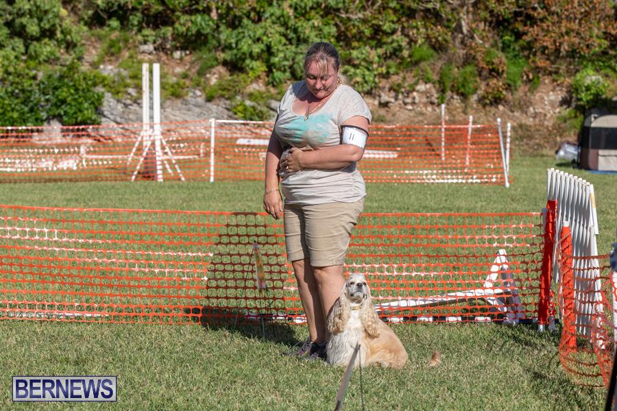 Devils-Isle-All-Breed-Club-2019-Bermuda-International-Dog-Shows-Bermuda-November-2-2019-0621
