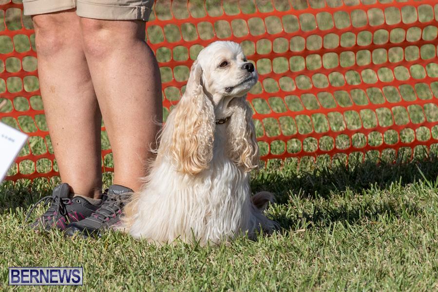 Devils-Isle-All-Breed-Club-2019-Bermuda-International-Dog-Shows-Bermuda-November-2-2019-0635