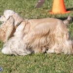 Devil's Isle All Breed Club 2019 Bermuda International Dog Shows Bermuda, November 2 2019-0654