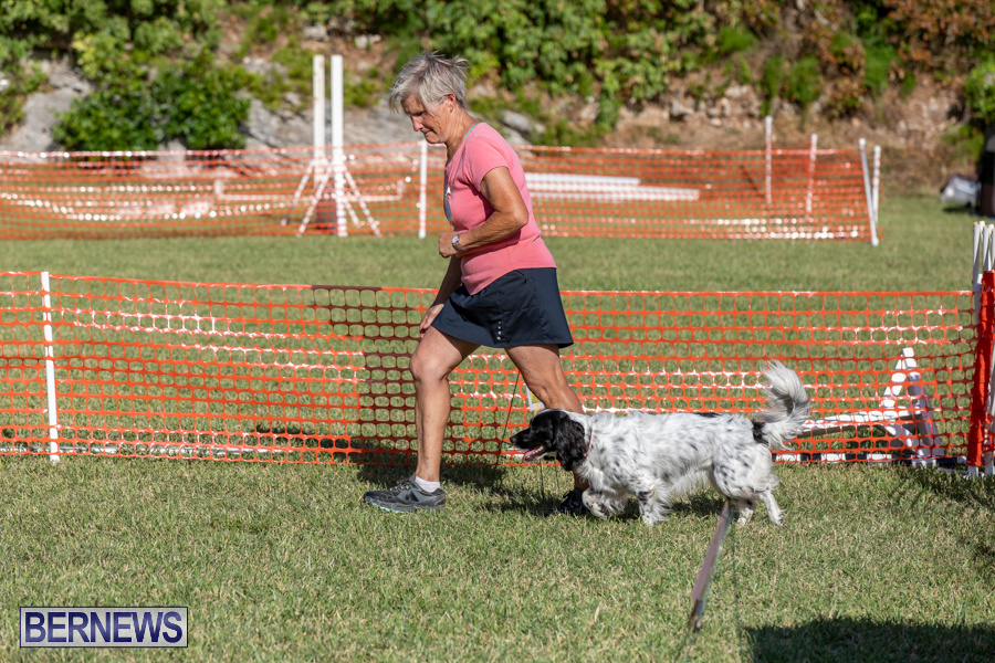 Devils-Isle-All-Breed-Club-2019-Bermuda-International-Dog-Shows-Bermuda-November-2-2019-0659