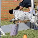 Devil's Isle All Breed Club 2019 Bermuda International Dog Shows Bermuda, November 2 2019-0667
