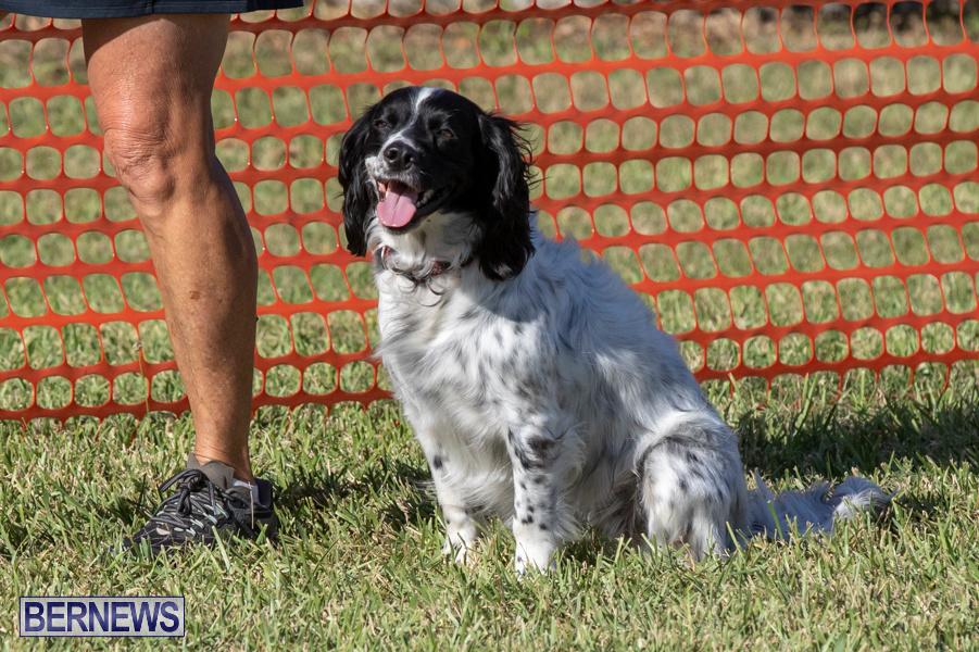 Devils-Isle-All-Breed-Club-2019-Bermuda-International-Dog-Shows-Bermuda-November-2-2019-0674
