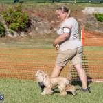 Devil's Isle All Breed Club 2019 Bermuda International Dog Shows Bermuda, November 2 2019-0726