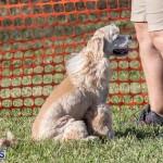 Devil's Isle All Breed Club 2019 Bermuda International Dog Shows Bermuda, November 2 2019-0737