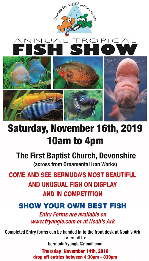 Fry-Angle Aquarium Society Fish Show Bermuda Nov 2019