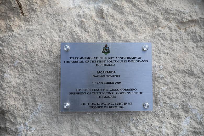 Tree Planting Bermuda November 2019 (4)