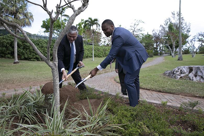 Tree Planting Bermuda November 2019 (5)