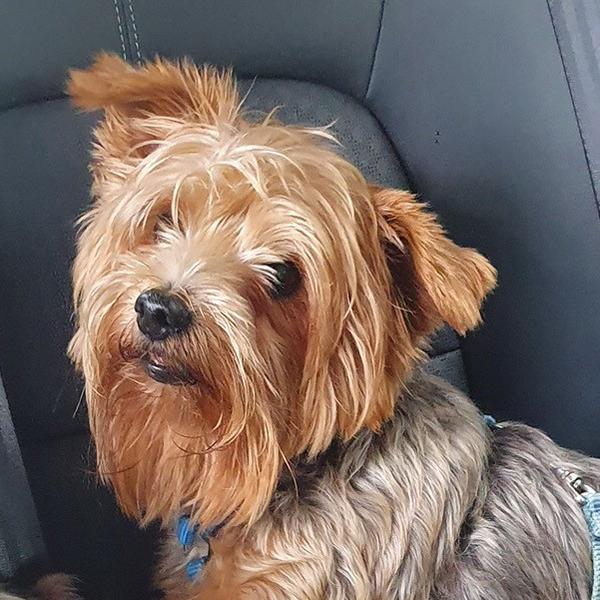 Yoyo Dog Stolen Bermuda Nov 2019