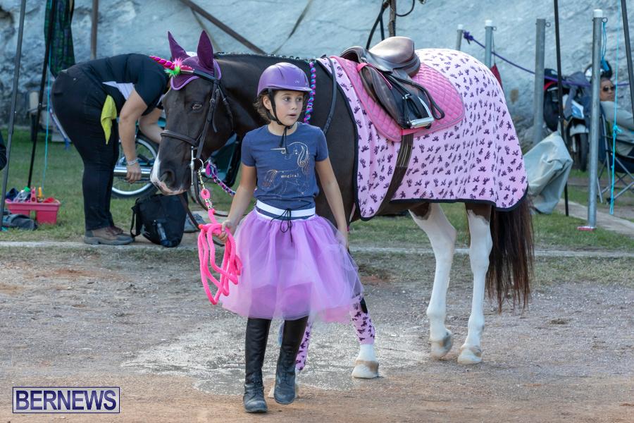 Bermuda-Equestrian-Federation-Welcome-Home-Show-December-7-2019-0541