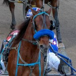 DHPC Harness Pony Racing Bermuda, December 26 2019-5977