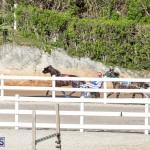 DHPC Harness Pony Racing Bermuda, December 26 2019-6014