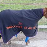 DHPC Harness Pony Racing Bermuda, December 26 2019-6054
