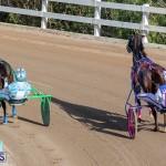 DHPC Harness Pony Racing Bermuda, December 26 2019-6115