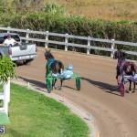 DHPC Harness Pony Racing Bermuda, December 26 2019-6116