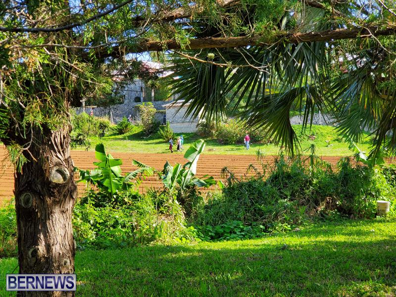 Bermuda National Trust tree planting Jan 2020 (6)