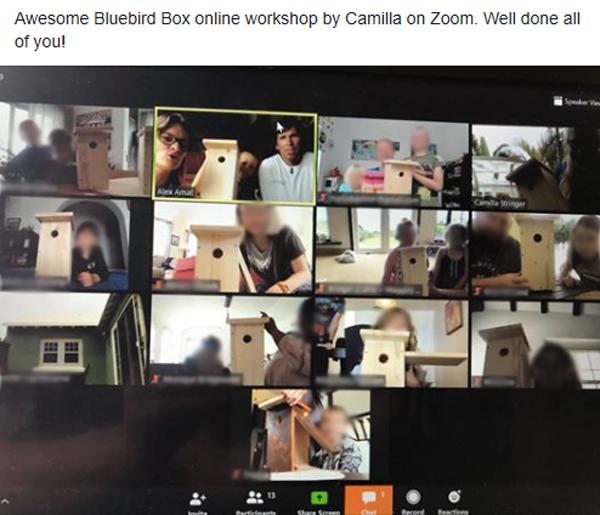 Bluebird Box workshop Bermuda April 2020
