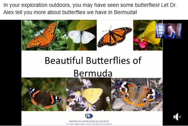 Butterfly Lecture by Dr Alex Amat Bermuda April 2020
