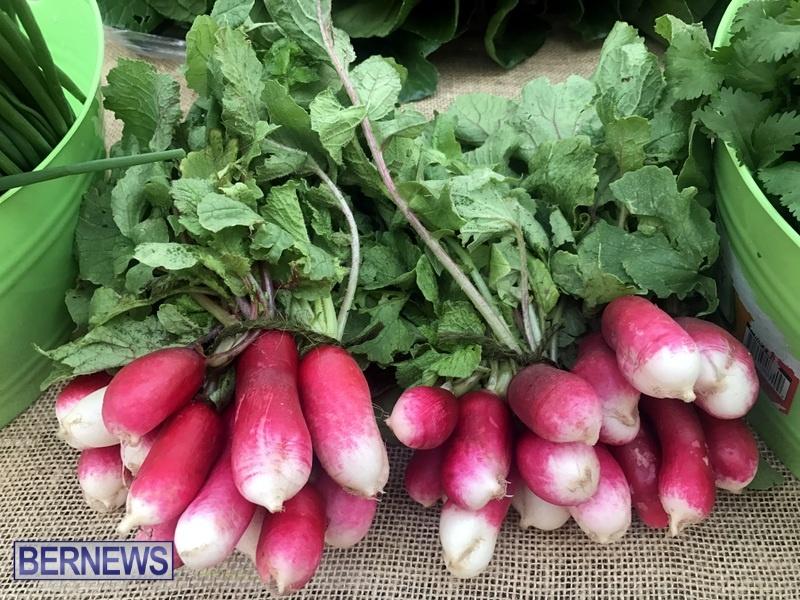 2020 Bermuda Farmers Market at Botanical Gardens Jan 4 (4)