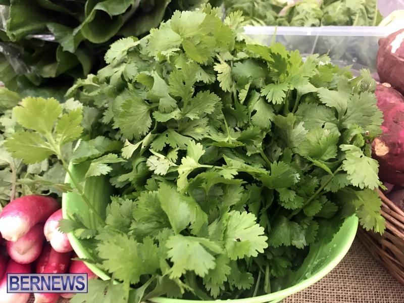 2020 Bermuda Farmers Market at Botanical Gardens Jan 4 (5)