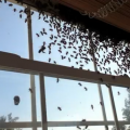 Video: Bees Make Home A Hive Of Activity