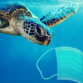 'Marine Life Don't Need PPE Plastic Pollution'