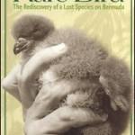 rare bird bermuda lucinda spurling