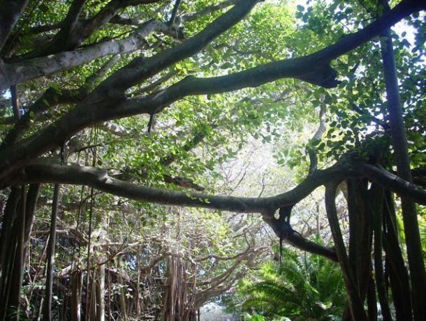 southlands-bermuda-open-day