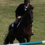 bermuda horse ag 12