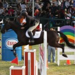 bermuda horse ag 14