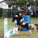bermuda horse ag 19